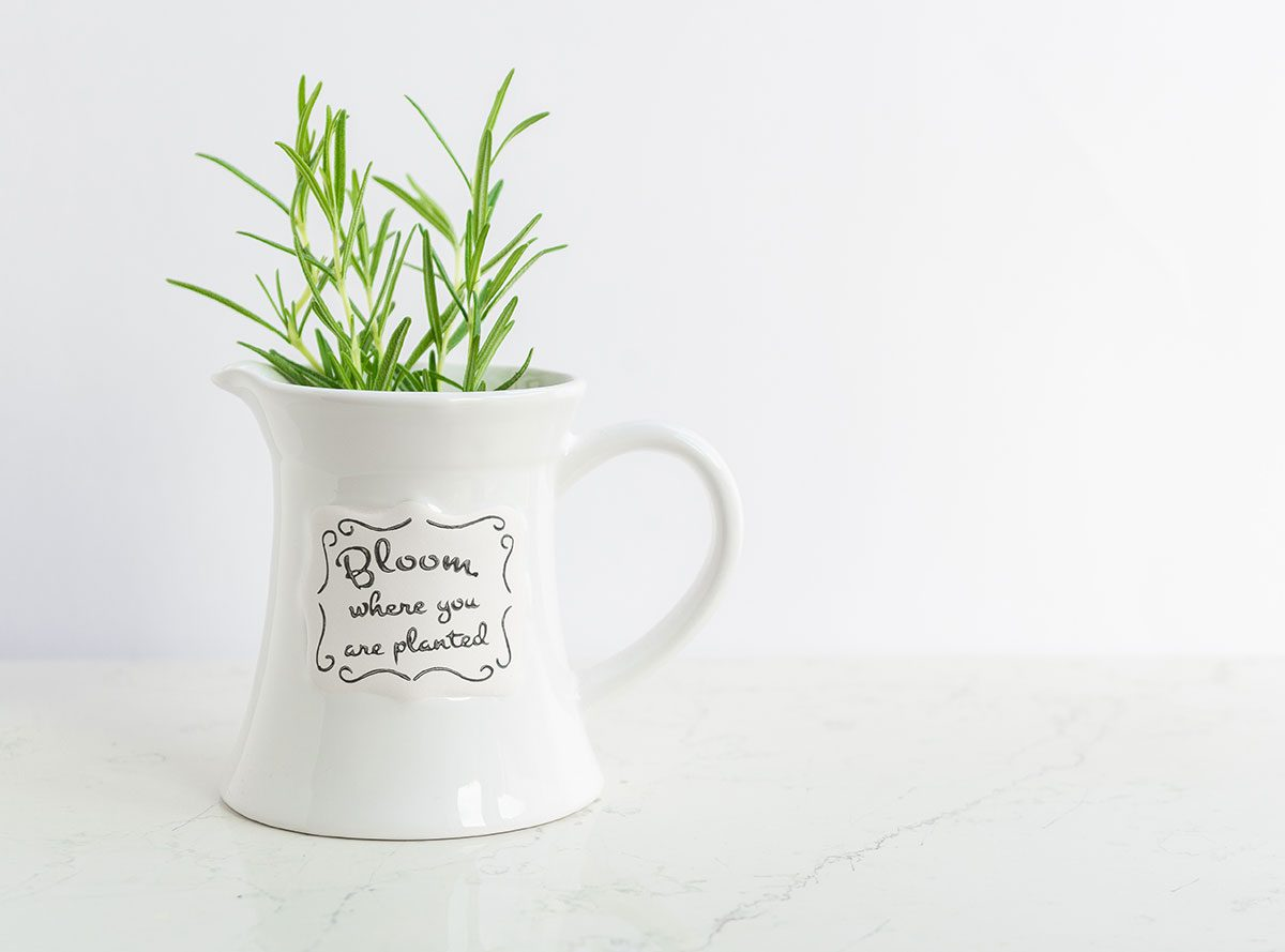 House Plants for Every Room in Your Home