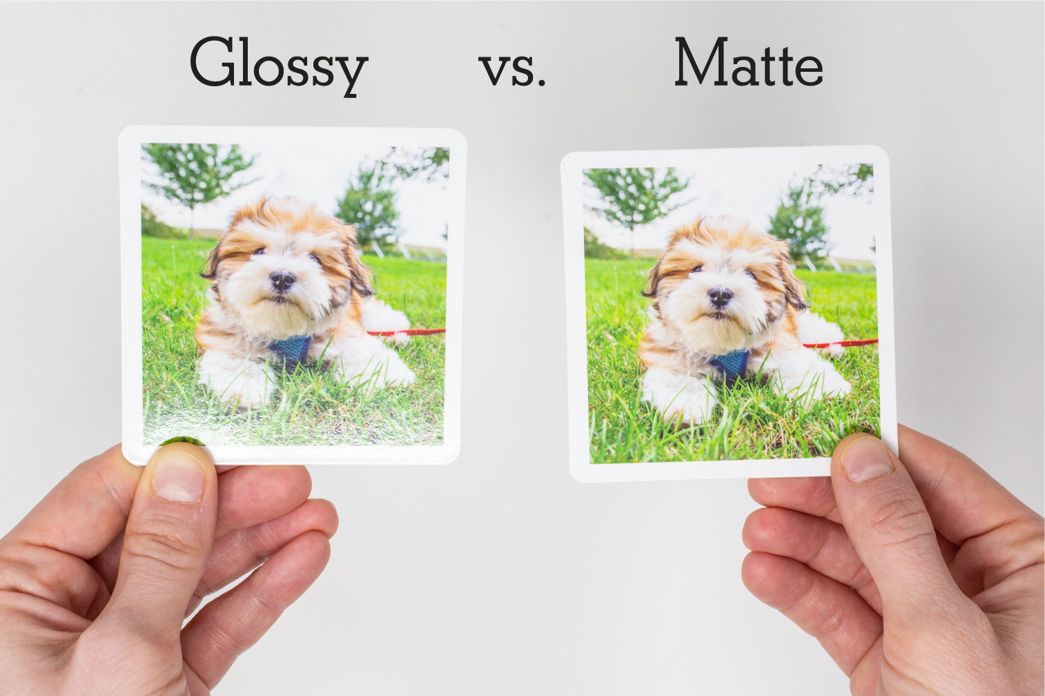 Glossy vs. Matte Finish Photo Memory Game